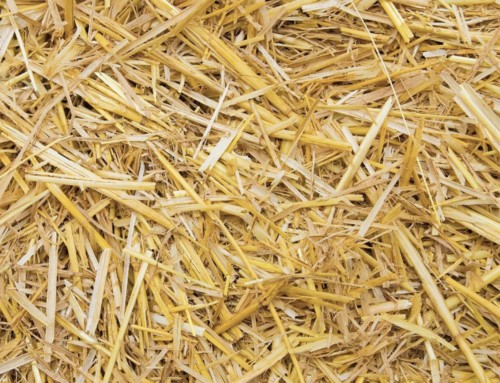 Fibre – Do your livestock have enough?